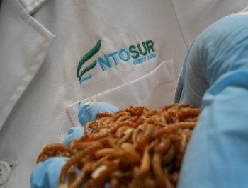Producto que comercializa Entosur Insect Farm